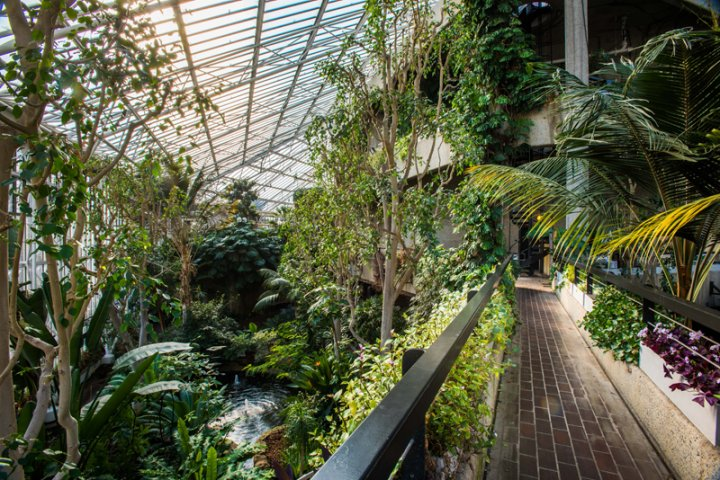 Wintergarten Barbican Conservatory in London